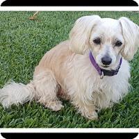 Adopt A Pet :: AUBRY - Winchester, CA