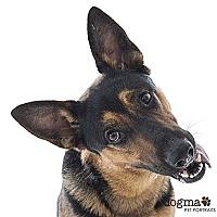 Adopt A Pet :: Sarge - San Diego, CA
