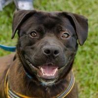 Adopt A Pet :: Lenny - Greenwood, SC