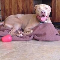 Adopt A Pet :: Blu - Newport Beach, CA