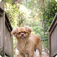 Adopt A Pet :: Simba - Clifton, TX
