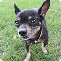 Adopt A Pet :: Peanut - Troy, IL