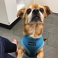 Adopt A Pet :: Buzz - Atlanta, GA