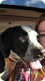 Labrador Retriever Mix Puppy for adoption in Lancaster, Ohio - Angel