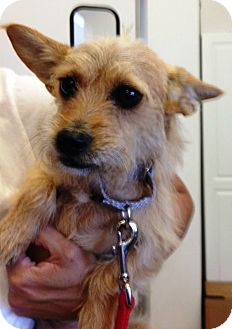 Terrier (Unknown Type, Small) Mix Dog for adoption in Los Angeles, California - KELLY