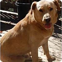 Adopt A Pet :: Buddy - Cumming, GA