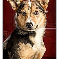 Adopt A Pet :: Ringo - Owensboro, KY
