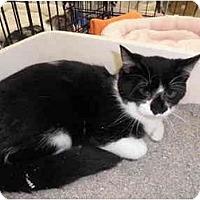 Adopt A Pet :: Mitch - Warren, MI