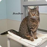 Adopt A Pet :: BonBon - Dover, OH