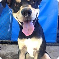 Adopt A Pet :: Bruno - Seattle, WA
