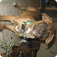 Adopt A Pet :: Fergus - Egremont, AB