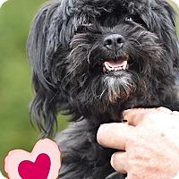 Adopt A Pet :: Sasha adoption pending - Manchester, CT
