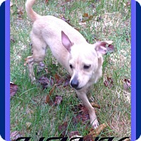 Adopt A Pet :: HANK - White River Junction, VT