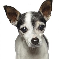 Adopt A Pet :: Wanda - oakland park, FL