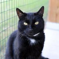 Adopt A Pet :: Eclipse - Newton, KS