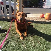 Adopt A Pet :: Moxie - Bakersfield, CA
