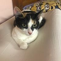 Adopt A Pet :: Zoey - Media, PA