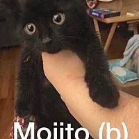 Adopt A Pet :: Mojito - Fowlerville, MI