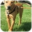 Photo 3 - Labrador Retriever Mix Puppy for adoption in Chicago, Illinois - Newt