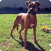 Adopt A Pet :: Harley - Baxter, TN