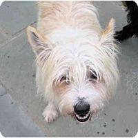 Adopt A Pet :: elliott - houston, TX
