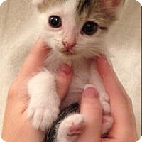 Adopt A Pet :: Forney - Aiken, SC