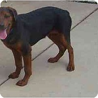 Adopt A Pet :: Titan - Evansville, IN