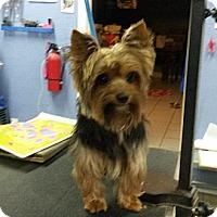 Adopt A Pet :: Oscar - Conroe, TX