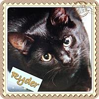 Adopt A Pet :: Ryder - East Brunswick, NJ