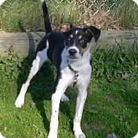 Adopt A Pet :: Dexter - Oberlin, OH