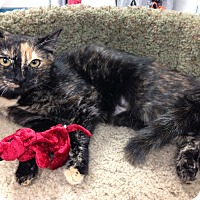 Adopt A Pet :: Figi - Newport Beach, CA