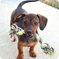 Adopt A Pet :: *Una - PENDING - Westport, CT