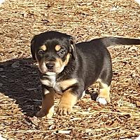 Adopt A Pet :: Triomphe - Marietta, GA