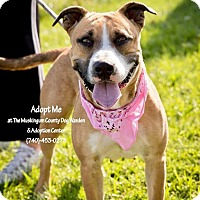 Adopt A Pet :: Ginger - ADOPTED! - Zanesville, OH