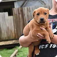 Adopt A Pet :: Jace - South Dennis, MA