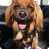Adopt A Pet :: Lionel - San Diego, CA