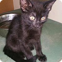 Adopt A Pet :: Twin brothers - Murdock, FL