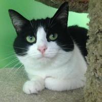 Adopt A Pet :: Oreo - Greensboro, NC