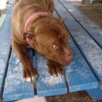 Adopt A Pet :: Reggie - East Smithfield, PA