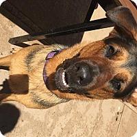 """Adopt A Pet :: Luna """"G"""" - Pleasant Grove, CA"""
