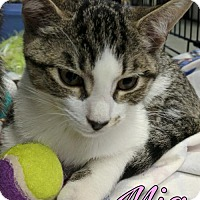 Adopt A Pet :: Mia - Island Heights, NJ