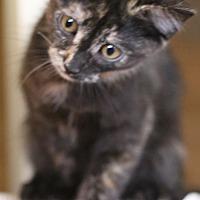 Adopt A Pet :: Dottie - Pasadena, CA