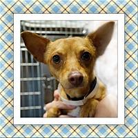 Adopt A Pet :: Hurricane Harvey Angus - TX - Tulsa, OK