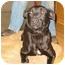 Photo 1 - Labrador Retriever Mix Dog for adoption in New Carlisle, Indiana - Ellie Mae