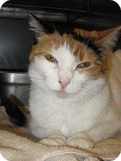 Domestic Shorthair Cat for adoption in Wheaton, Illinois - Mimi