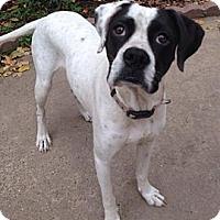 Adopt A Pet :: Sugar - Silsbee, TX