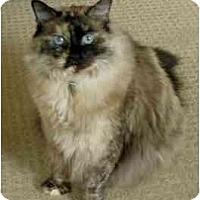 Adopt A Pet :: Daphne - Keizer, OR