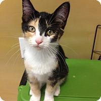 Adopt A Pet :: Candy - Byron Center, MI