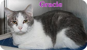 Manx Cat for adoption in Lewisburg, West Virginia - Gracie