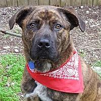 Adopt A Pet :: Ajax - Lago Vista, TX